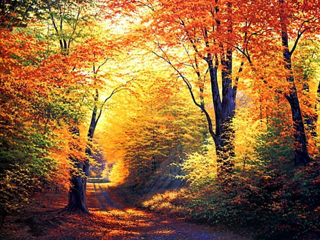 40 News Free Autumn Background Images Summer Background