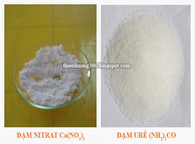 Đạm urê (NH2)2CO, đạm nitrat (NaNO3, Ca(NO3)2)