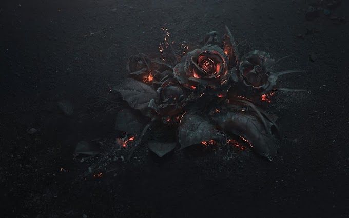 Flores Rosas Queimadas Wallpaper
