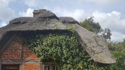 Ivy growing into the roof thatch of an old English cottage