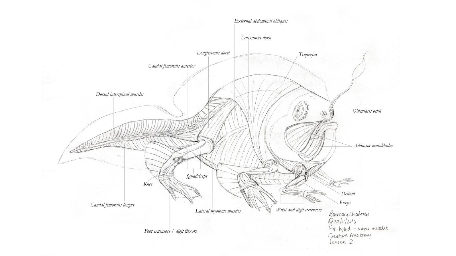 Großartig Fish Head Anatomy Ideen - Menschliche Anatomie Bilder ...