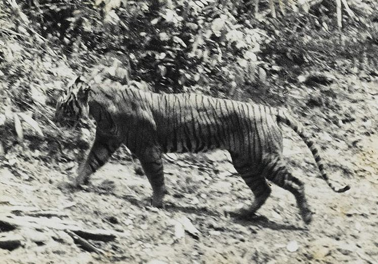 Recently Extinct Animals