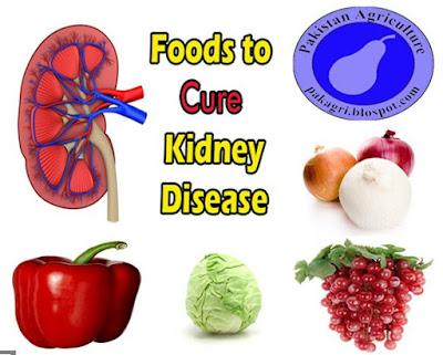 Kidney Illness treatments