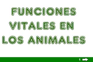 FUNCIONES VITALES DE LOS ANIMALES