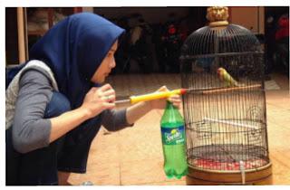 Memandikan burung dengan sprayer