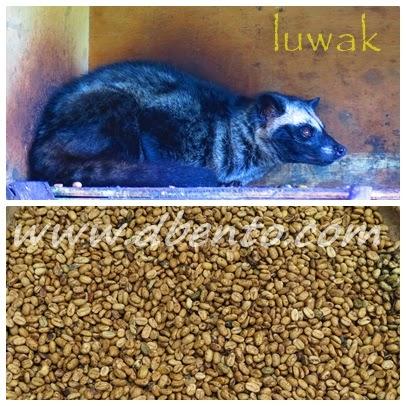 luwak
