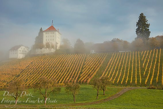 Schloss Heidegg mit Rebberg - LU