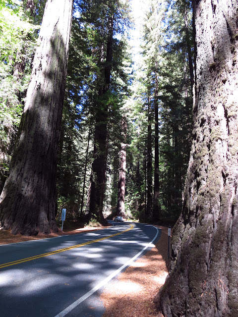 Avenue of the Giants California