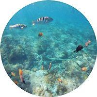 Snorkel-Nusa-Penida-Indonesia