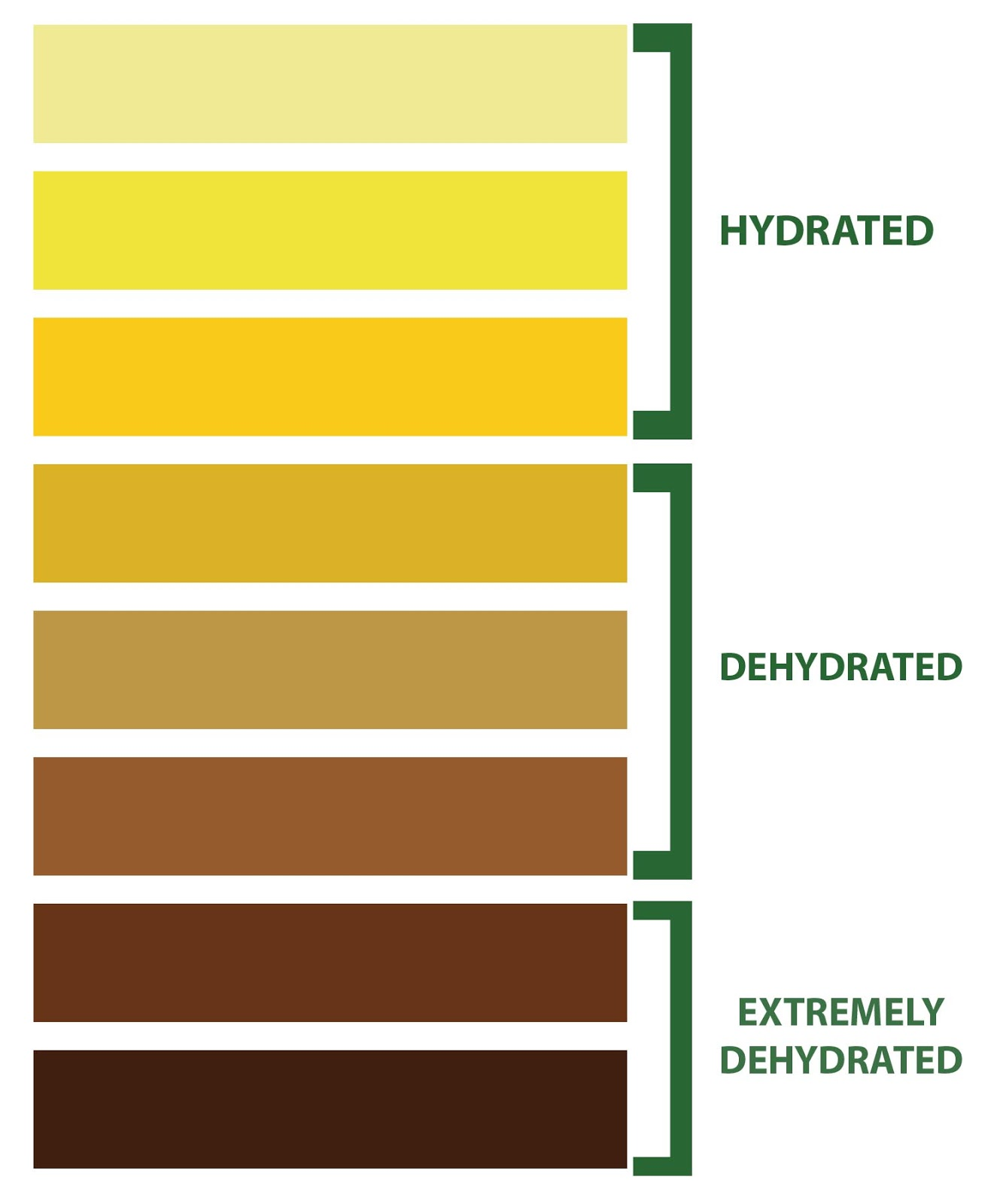 Color Coordination Chart Drug Free Sport Perspectives: Hydration 411