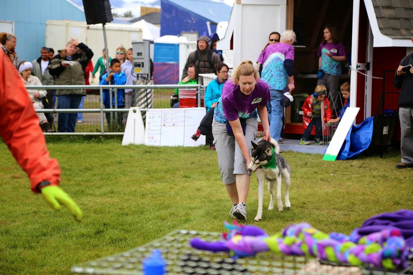 Huskie training, Alaska State Fair