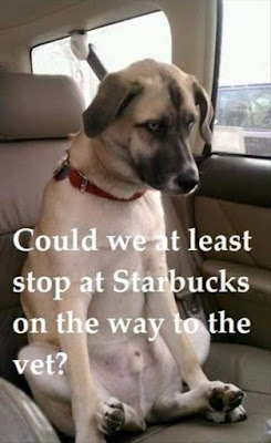 Dog Humor, Can we stop at starbucks