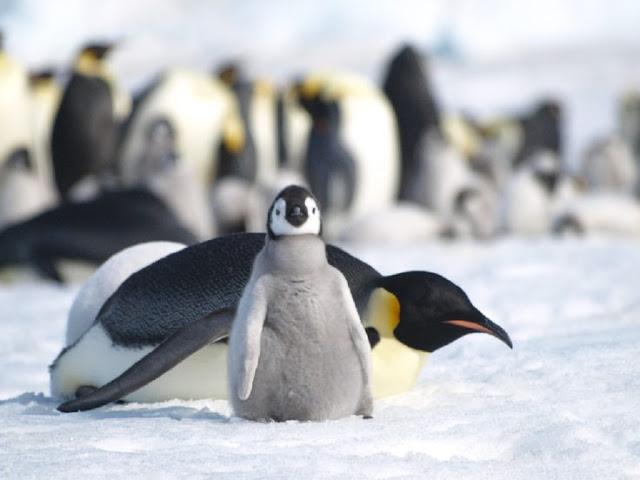 Poor outlook for biodiversity in Antarctica