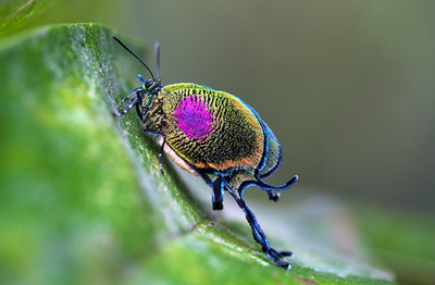 اغرب الحشرات بالصور، اغرب حشرات العالم ، حشرات غريبة ، غرائب الحشرات ، اغرب الحشرات في العالم
