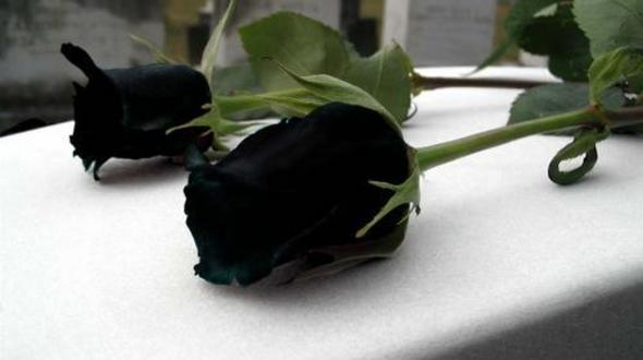 Black Roses | Bunga Ros Hitam ~ Wordless Wednesday