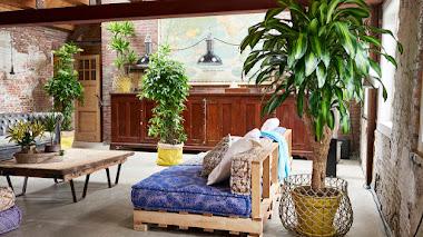 Plantas de paisaje interior para combatir la contaminación del aire en el hogar