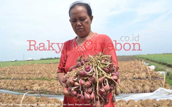 petani kesal harga bawang sangat rendah