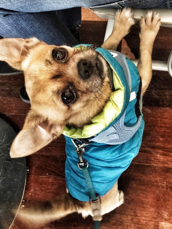 Tips for travelling with your pet | Ioanna's Notebook #travelling #travel #pet #flyingwithyourpet