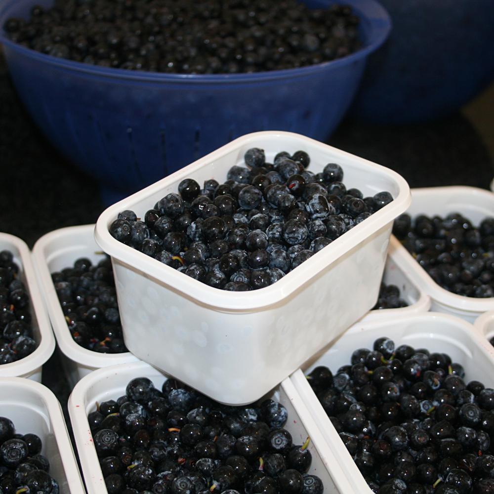Rørte blåbær fryse
