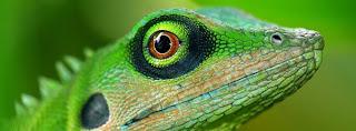 LizardTech Software Products