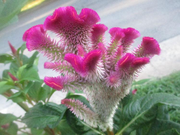 Green Jean: crazy flowers750 x 563 jpeg 93kB