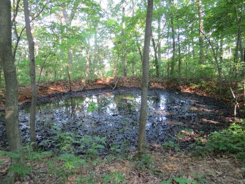 mucky pond
