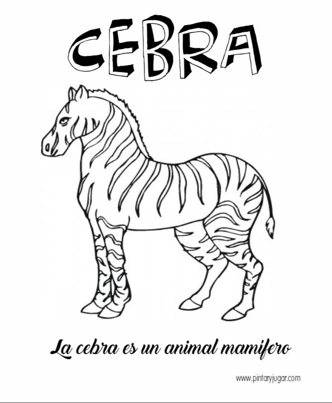 Dibujos De Cebra Para Colorear Cebras Dibujos Colorear