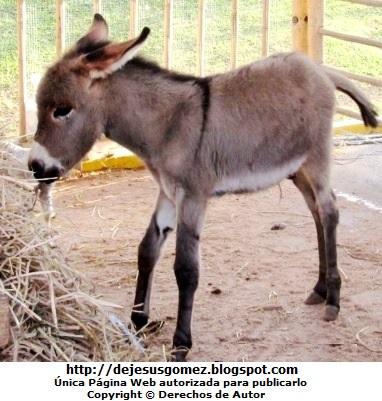 Foto del burro de perfil. Foto de un burro de Jesus Gómez