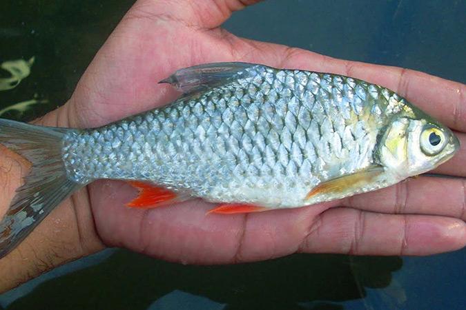 Dlium.com Opak River