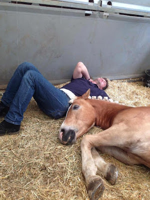 [Sunday Fun] 8 Things You Gave Up During Summer Because Of Horse Shows