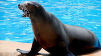 Sea lion pictures_Otariinae