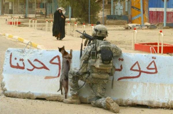 Cães de Guerra cumprem seu jogo os gatos também!