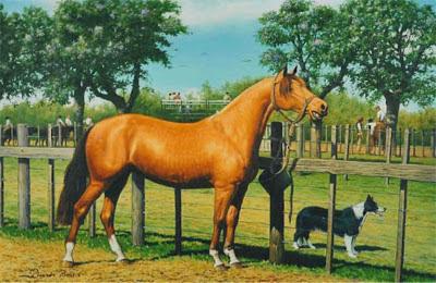 caballos criollos campo