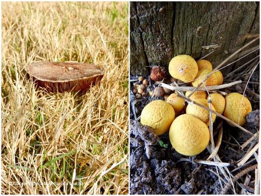 Los hongos presentan formas y colores muy variados - Chacra Educativa Santa Lucía