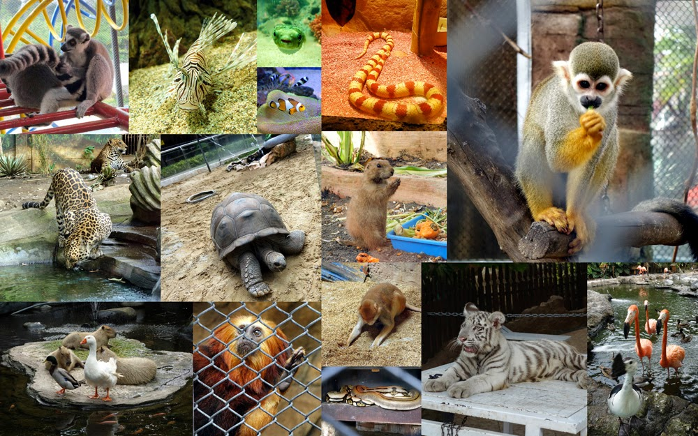 Tesyasblog The Best Zoo In Indonesia Batu Secret Zoo