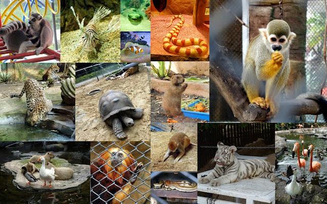 Tesyasblog The Best Zoo In Indonesia Batu Secret Zoo