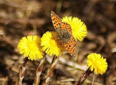 Senderismo y primavera en la Sierra de Guara