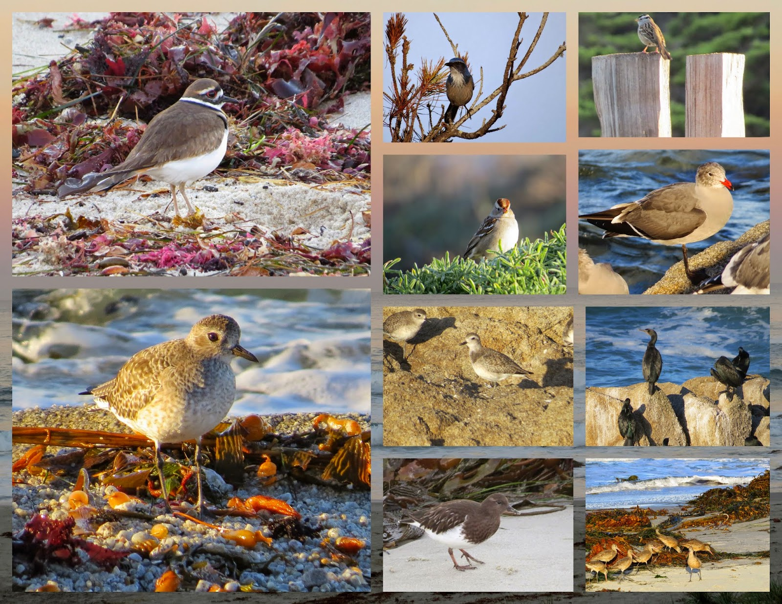 Birds in Monterey