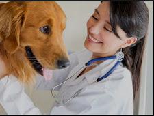 Cat and Dog Hospital