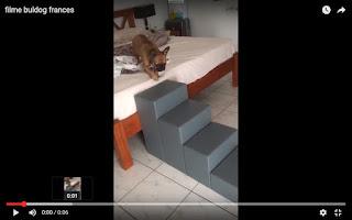 escadas para buldog francês