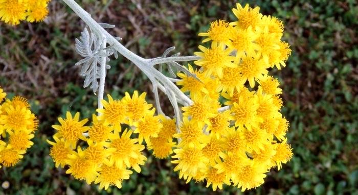 Color en el jard n todo el a o plantas que florecen en junio - Plantas para el jardin todo el ano ...