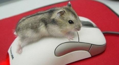 секретики компьютерной мыши