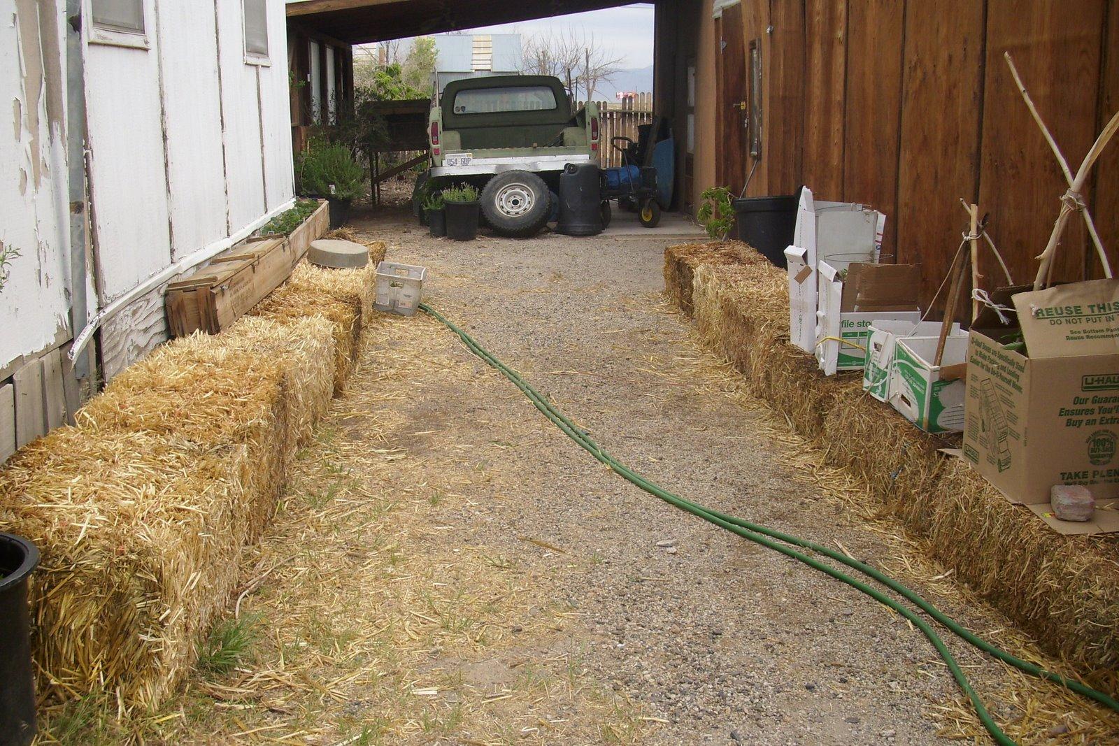 Growing and Using Moringa, Comfrey, and Healing Herbs: Straw Bale ...