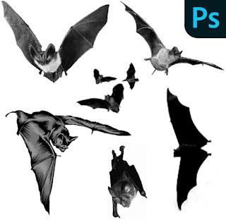 فرش الخفافيش فوتوشوب