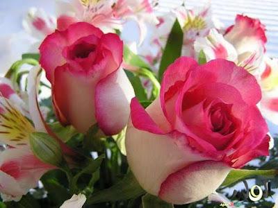 ورود الحب الرائعة والجميلة