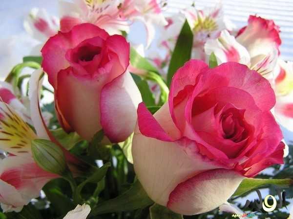 صور زهور وازهار جميلة