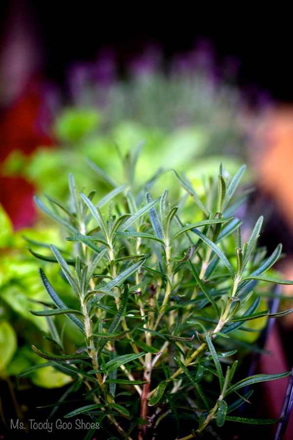 50 Ways To Use Fresh Herbs - Ms. Toody Goo Shoes