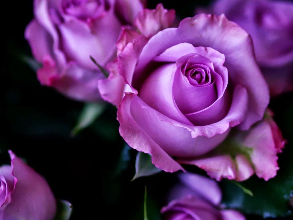 Dean Designs: The Purple Corner - Purple Roses  Purple