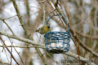 Vetbollen maken voor vogels, met of zonder frituurvet, vogels voeren