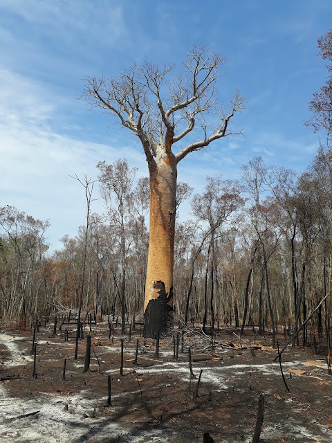 The last chance for Madagascar's biodiversity